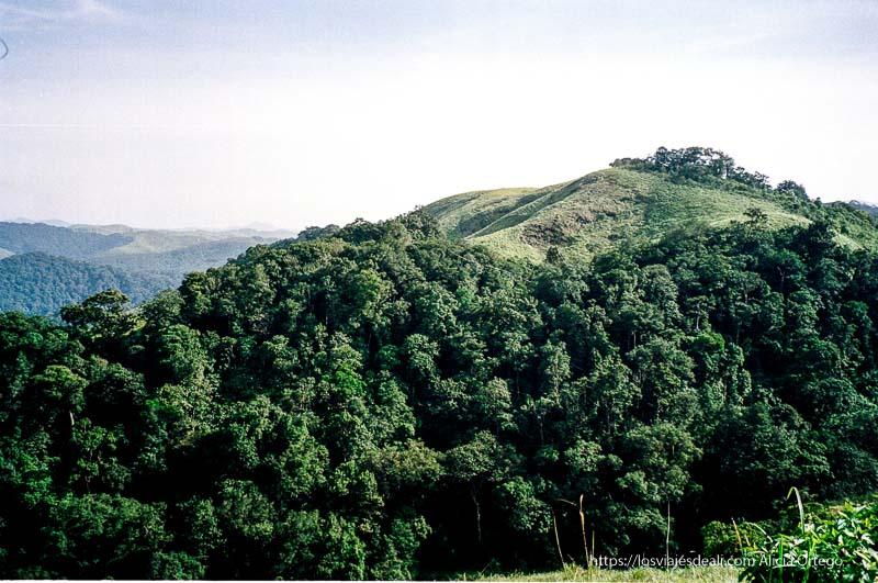 paisaje de montes y bosque verde en periyar de tamil nadu a kerala