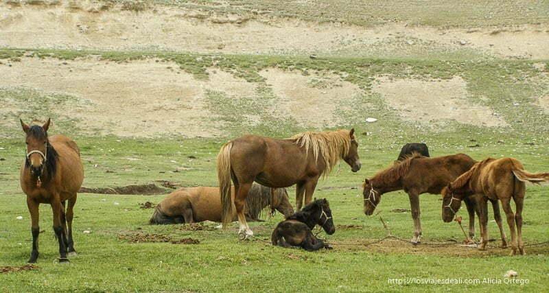 caballos pastando en tash rabat