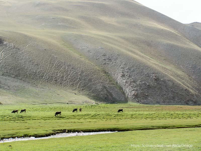 colinas verdes con caballos pastando en tash rabat