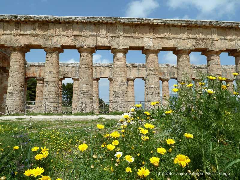 templo del yacimiento de segesta con flores amarillas en primer plano