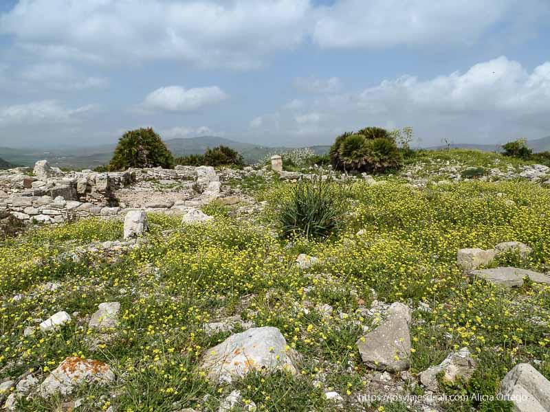 ruinas del yacimiento de segesta entre flores amarillas