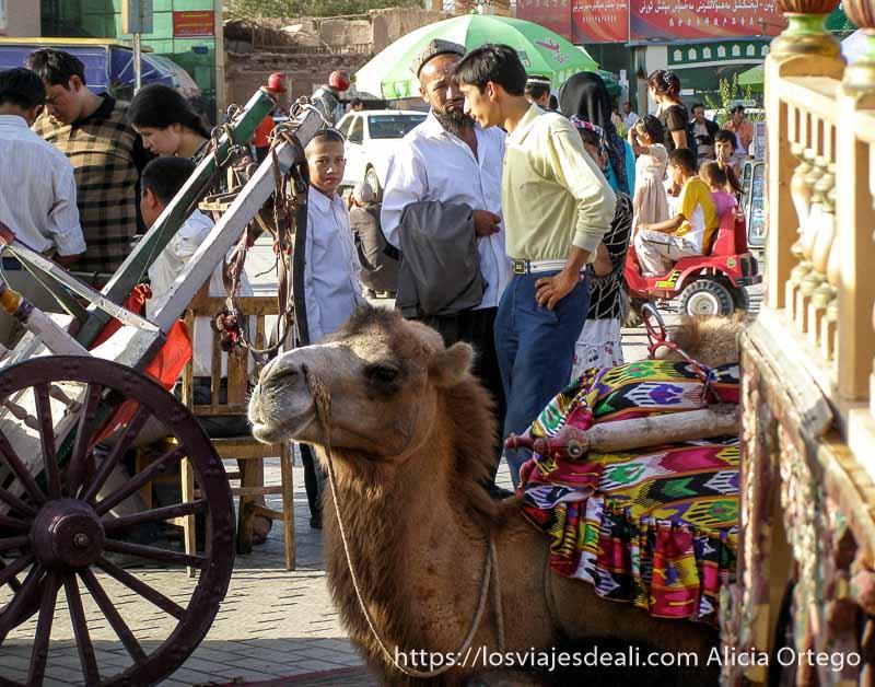 camello en la plaza de kashgar en la ruta de la seda