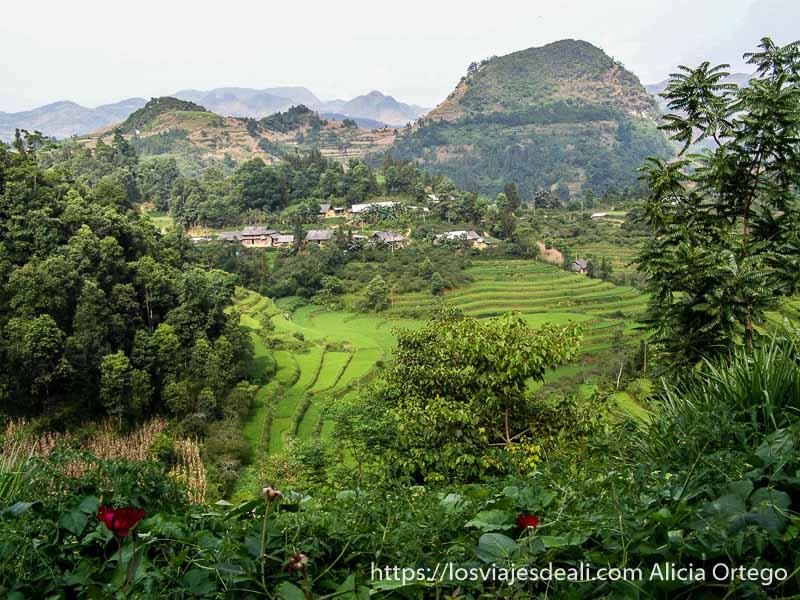 paisaje de arrozales entre montañas muy verde en el norte de vietnam