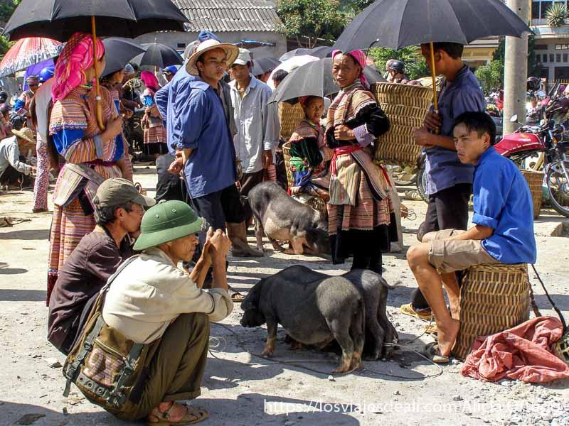 venta de cerdos en el mercado de bac ha en el norte de vietnam