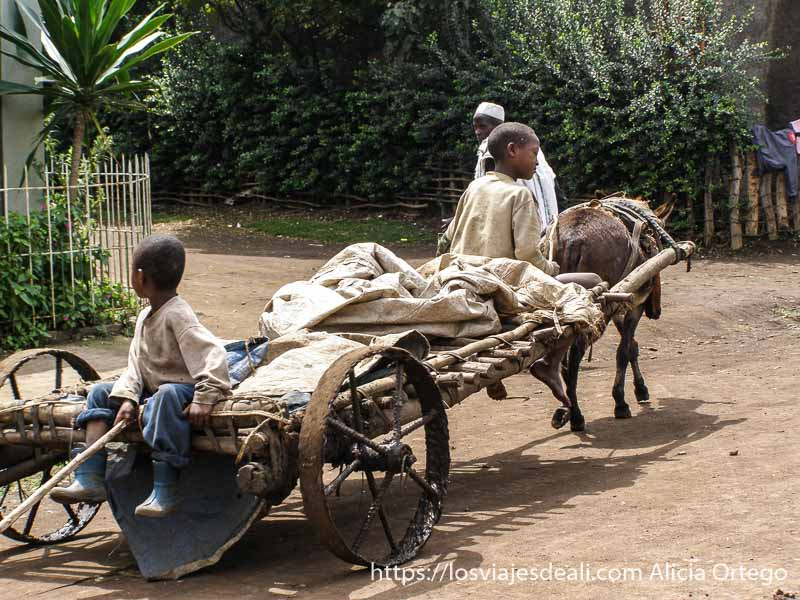 dos niños en un carro de madera tirado por un burrito de camino al lago chamo