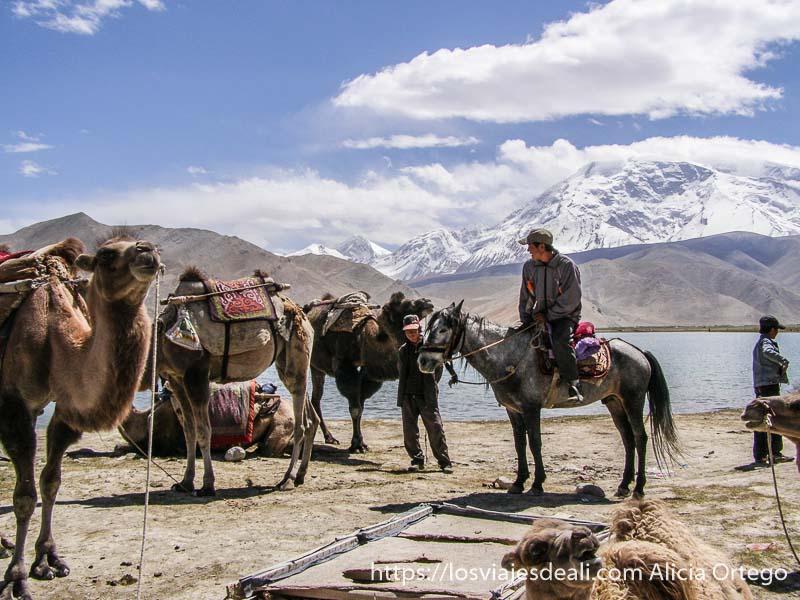 camellos bactrianos y hombre a caballo con el lago karakul detrás
