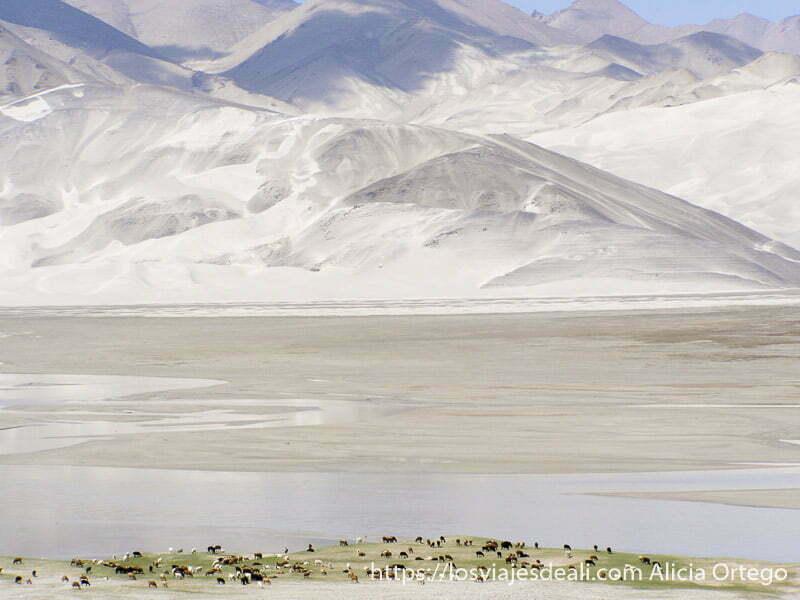 laderas de arena y lago con ovejas en la orilla cerca del lago karakul