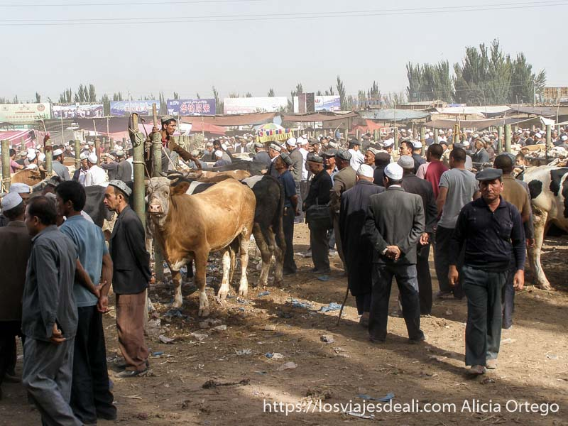 panorámica del mercado de Kashgar lleno de hombres y vacas