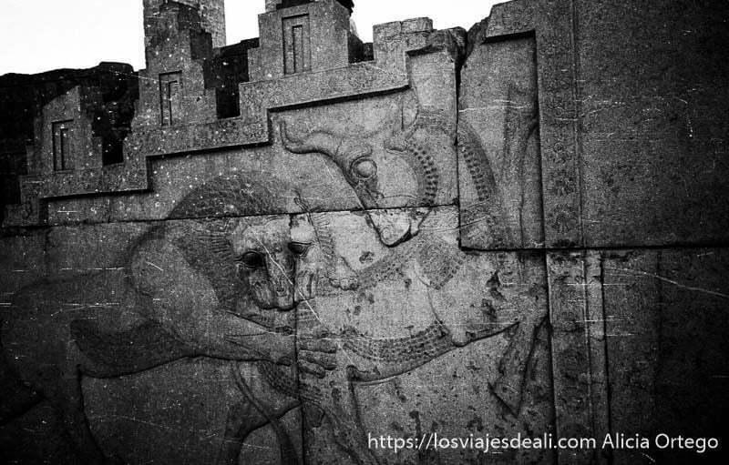 bajorrelieve de persépolis un león mordiendo el trasero a un toro