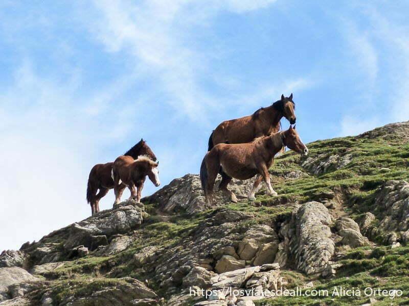 caballos andando por la montaña pirineo navarro