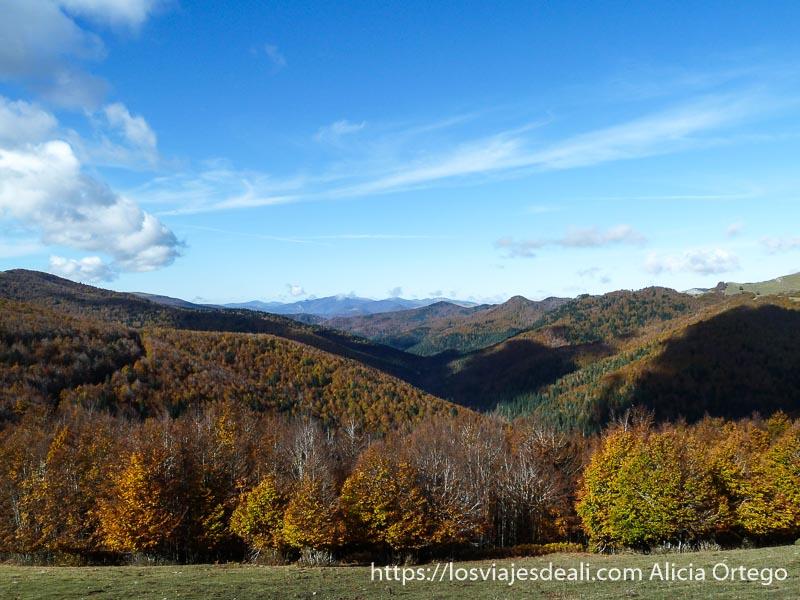 selva de irati desde la montaña con colores de otoño en pirineo navarro