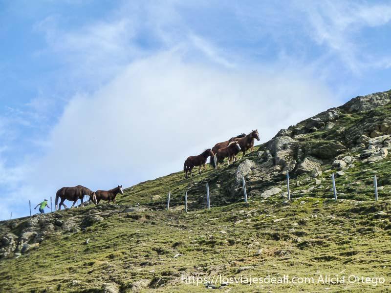 caballos semisalvajes corriendo por una ladera en el pirineo navarro