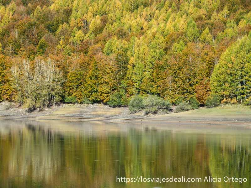 árboles con colores del otoño reflejándose en el agua en selva de irati