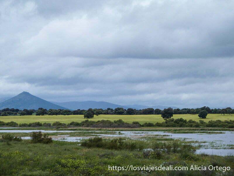 paisaje con monte con forma de volcán perfecto tablas de daimiel