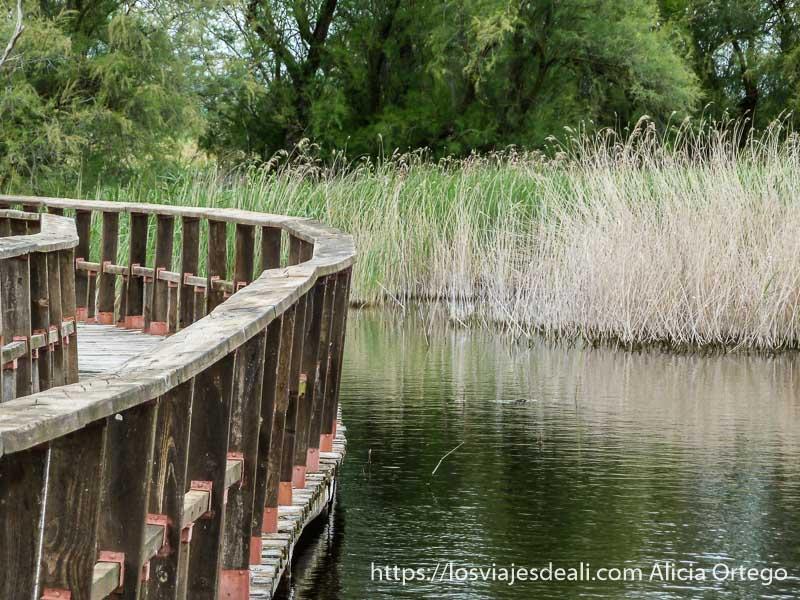 pasarela de madera, carrizos y árboles al fondo tablas de daimiel