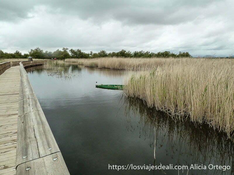 pasarela de madera y agua con barca verde asomando entre carrizos tablas de daimiel
