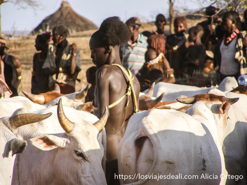 chico del jumping bull entre las vacas seleccionando tribu hamer