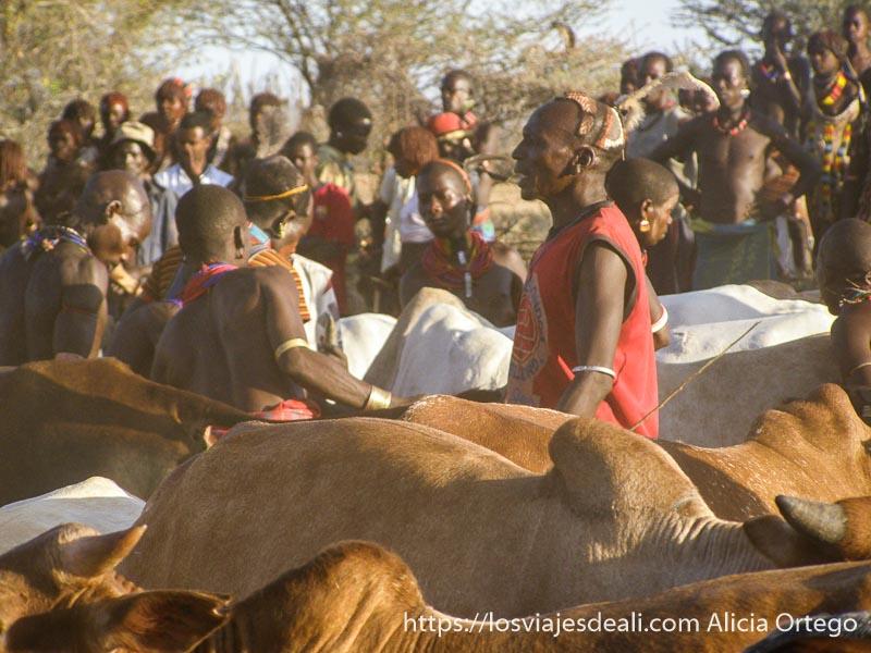 hombre entre vacas en el jumping bull tribu hamer