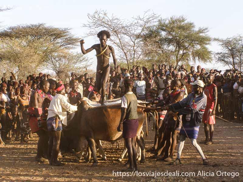 hamer saltando sobre vacas que sujetan los demás y detrás el público tribu hamer
