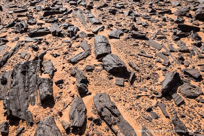 madera fosilizada de color negro entre arena roja paisajes del sahara