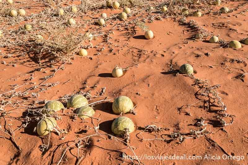 calabazas del desierto paisajes del sahara