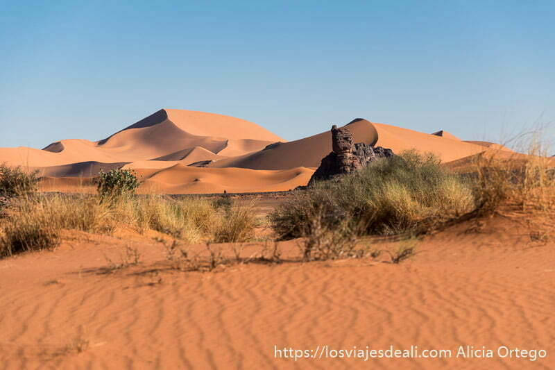 matorrales y dunas al atardecer paisajes del sahara