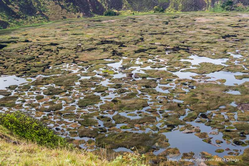 fondo del cráter de rano kau con agua y plantas tours en isla de pascua