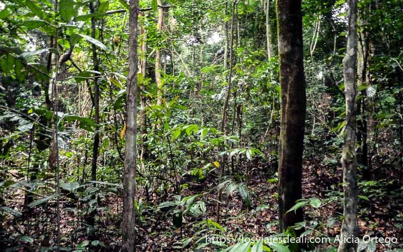 vegetación y poca luz en la selva de camerún
