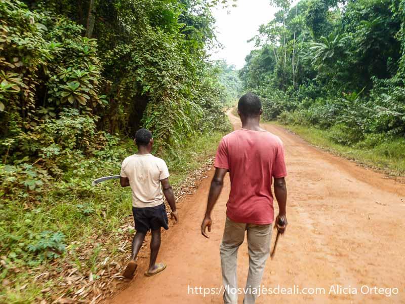 guías con machetes para entrar en la selva de camerún