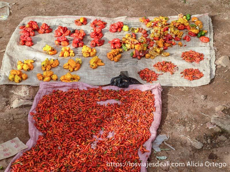 puesto de pimientos rojos y amarillos de distintos tamaños carreteras de camerún