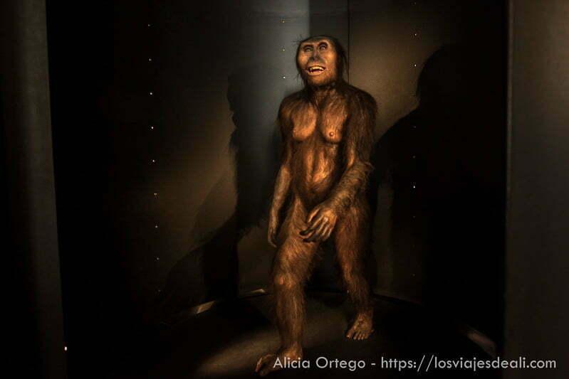 representación de homo sapiens en museo Burgos
