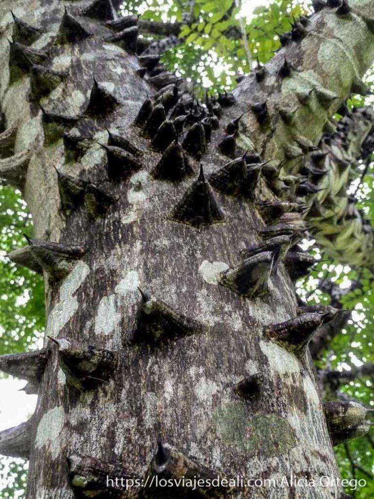 tronco de árbol lleno de gruesas espinas en limbe