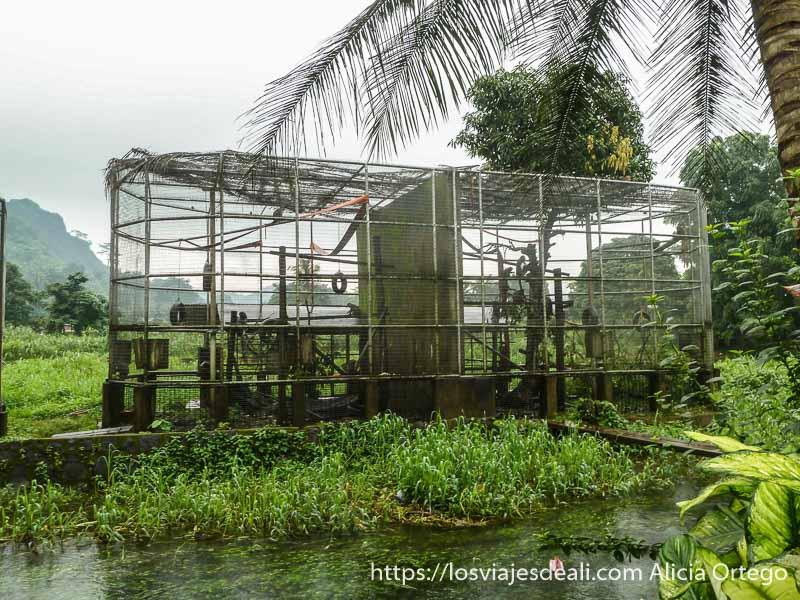 jaula del centro de recuperación de vida salvaje de limbe