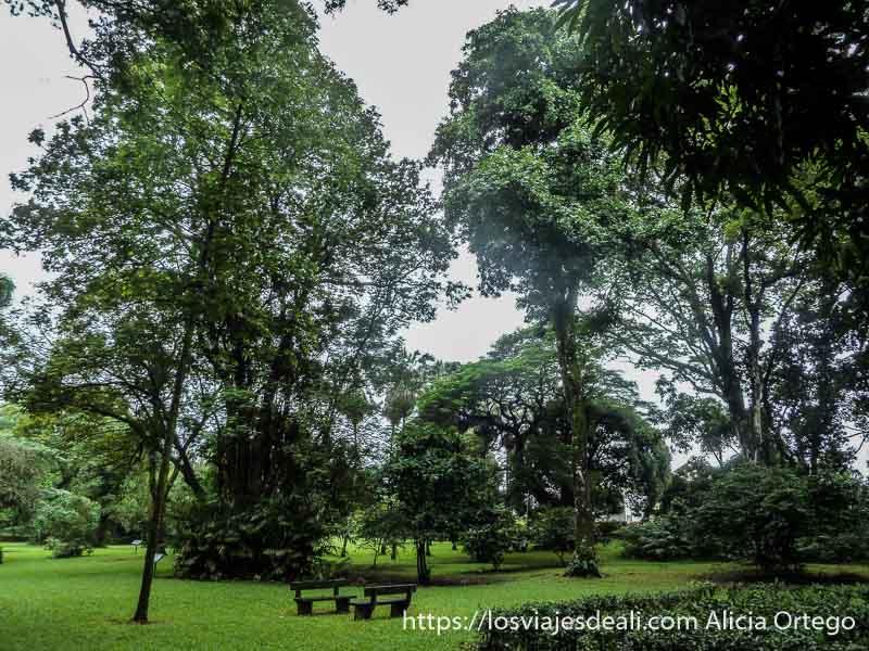 árboles y bancos en el jardín botánico de limbe
