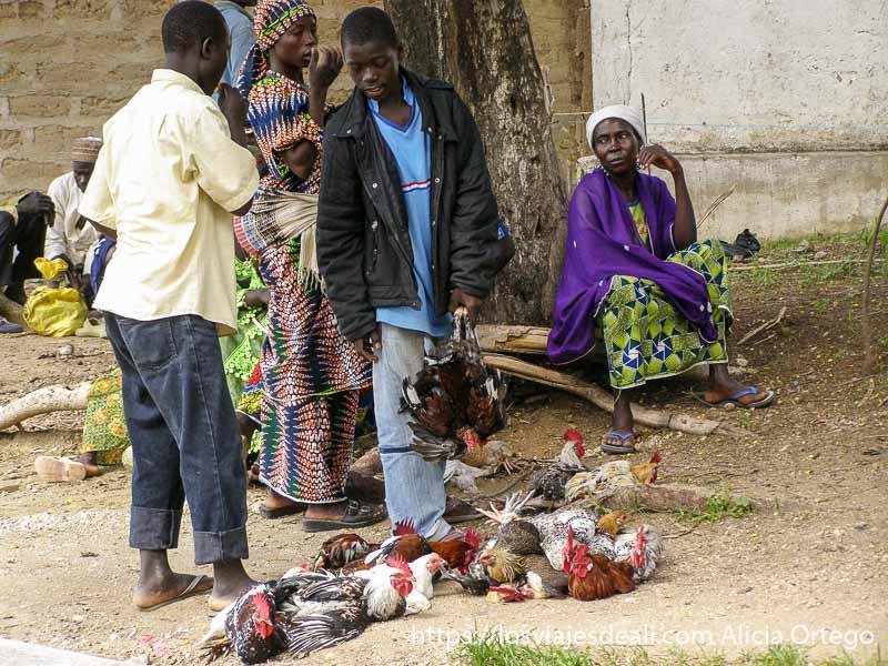 chico con un montón de gallos a sus pies para venderlos mercado de tourou