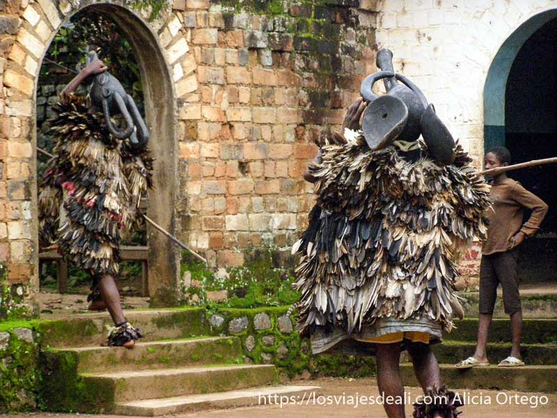 bailarines con traje de plumas y máscara en la cabeza con forma de elefante reino de bafut
