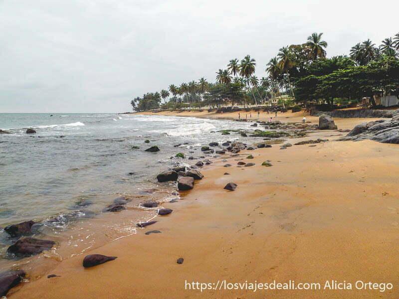 playa de kribi con palmeras sur de camerún