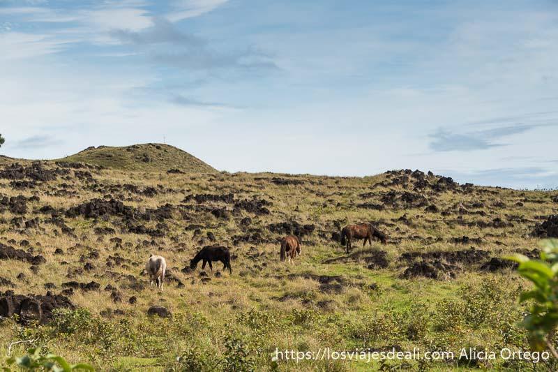 caballos en el campo tours en isla de pascua