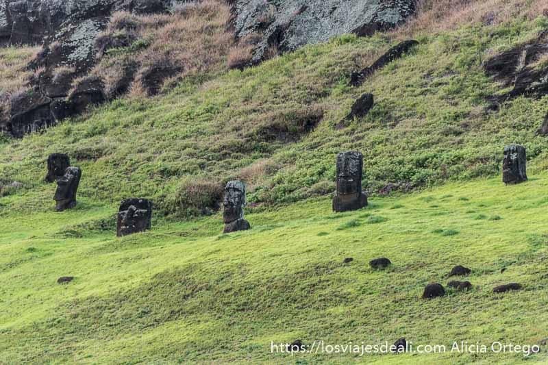 moais en la ladera interior del volcán rano raraku tours en isla de pascua
