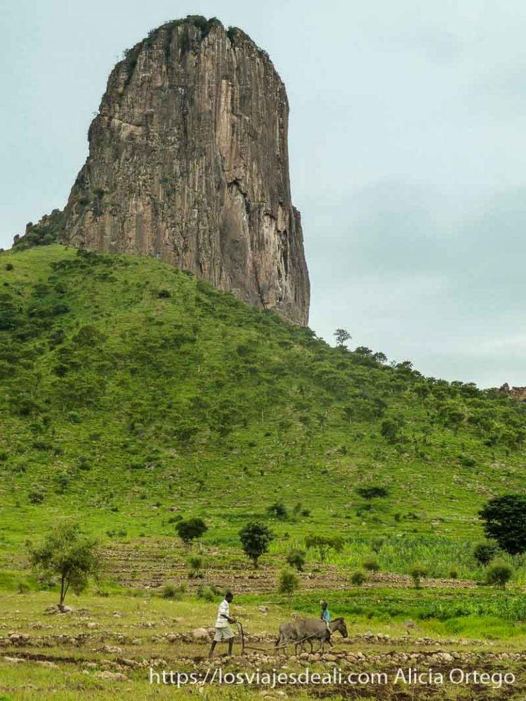 montaña de roca con granjero a sus pies labrando con burritos trekking en rumsiki