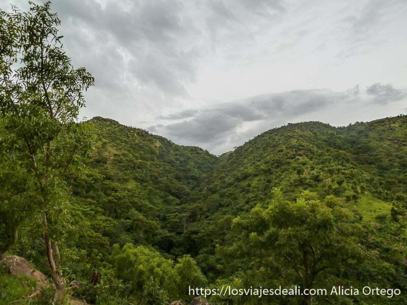 montañas llenas de vegetación bajo cielo nublado trekking en rumsiki