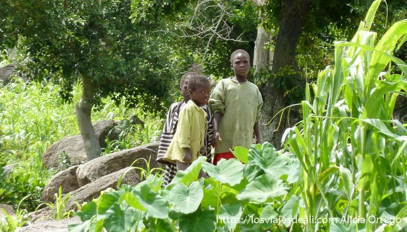 tres niños mirándonos de lejos entre plantas de mijo trekking en el monte ziver