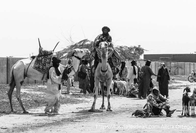 tuareg sobre su camello en mercado de gorom gorom burkina faso
