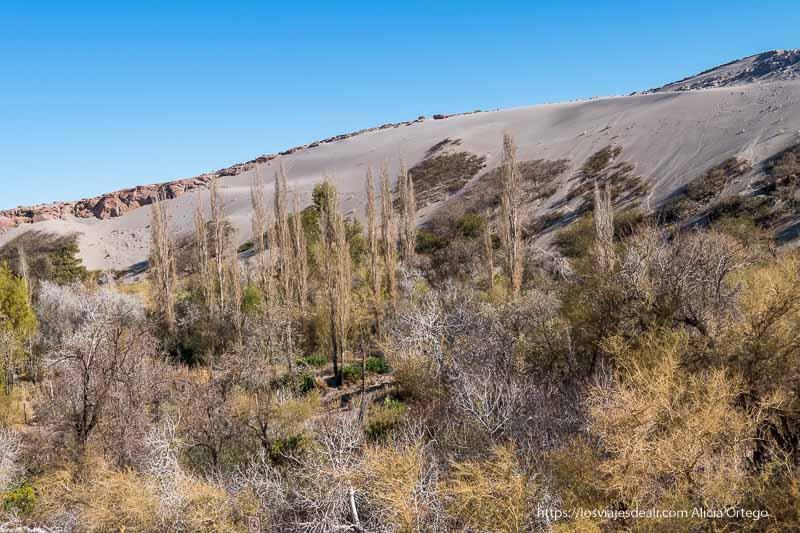 quebrada del jere con árboles frutales y duna