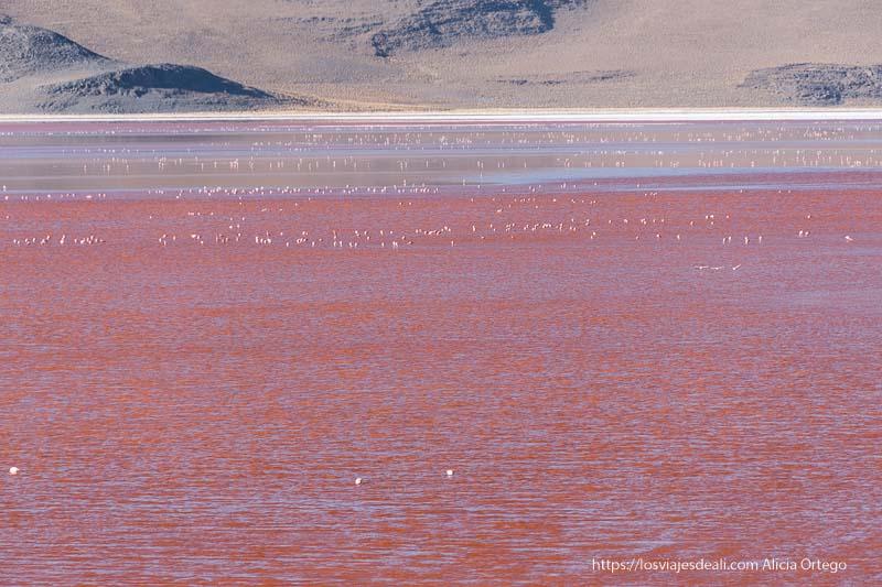 agua roja de la laguna colorada salpicada de flamencos reserva nacional de fauna andina eduardo avaroa