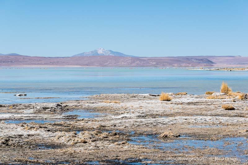 laguna de agua turquesa y gran volcán en el horizonte reserva nacional de fauna andina eduardo avaroa