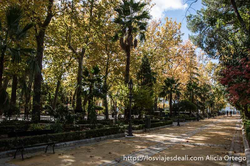 parque de la alameda con palmeras y árboles de hojas amarillas y rojas escapada a ronda