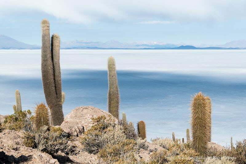 cactus y salar de uyuni al fondo