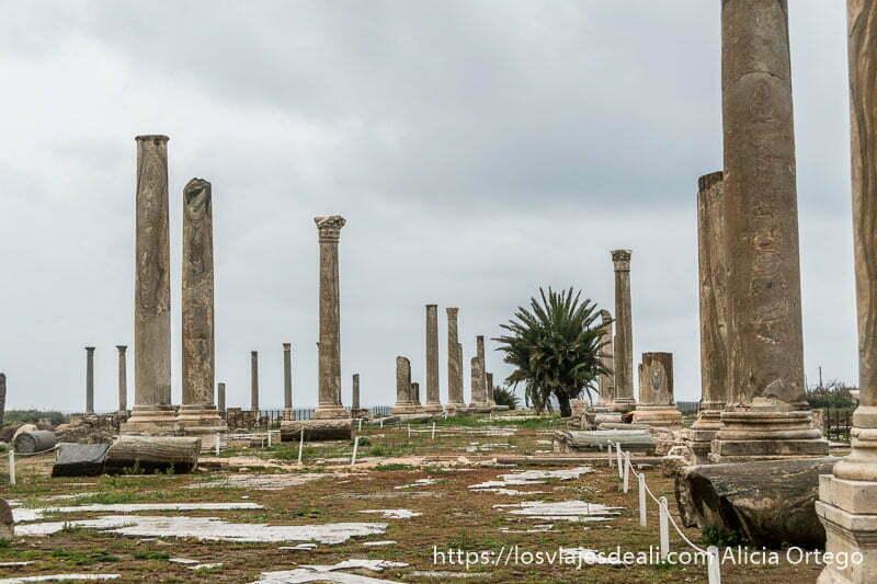 avenida con columnas a los dos lados y una palmera casi en el centro en las ruinas de tiro