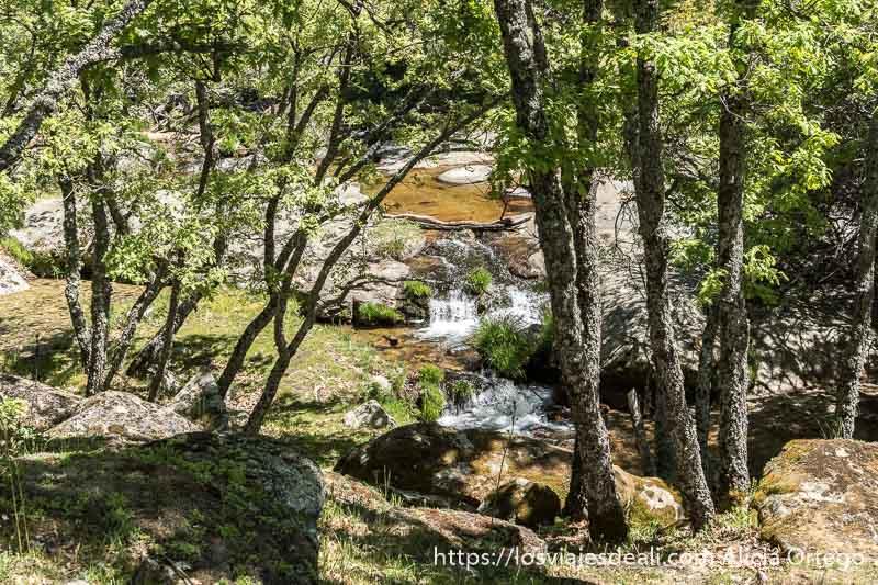pozas de agua y pequeñas cascadas entre árboles